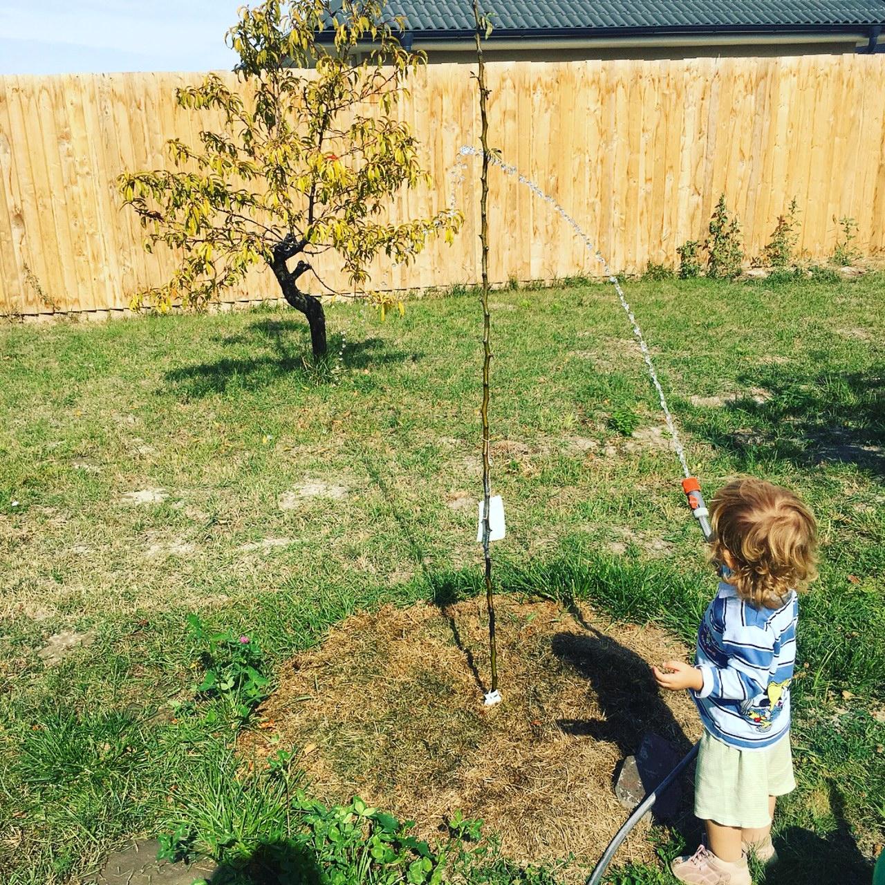 Domáce vzdelávanie v praxi - pestovateľské práce