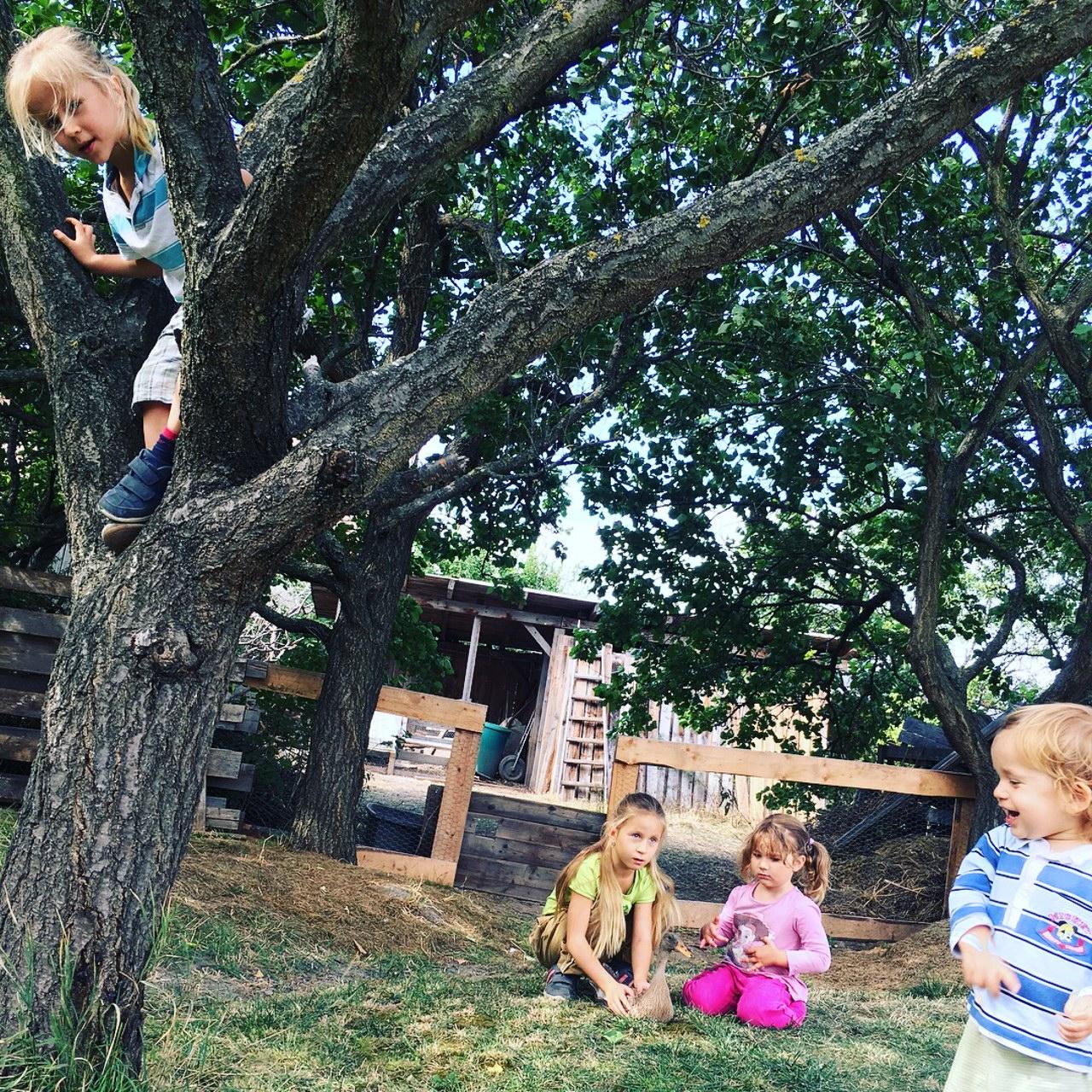 Domáce vzdelávanie v praxi - prírodopis